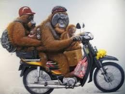 monyet naik motor